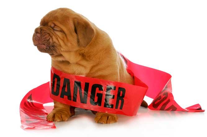 危険の標識テープを巻かれた子犬の画像