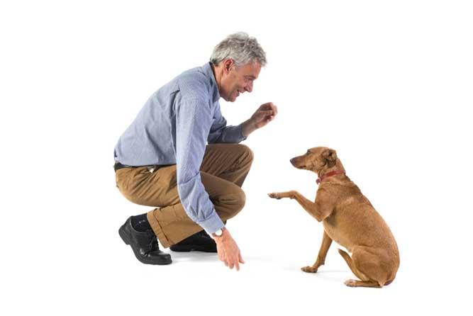 犬にしつけをする男性