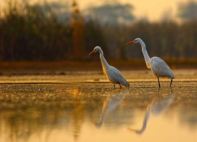 二羽の鳥の写真