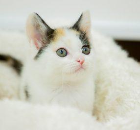 猫ちゃんのお迎え時に気を付けたい7つのこと