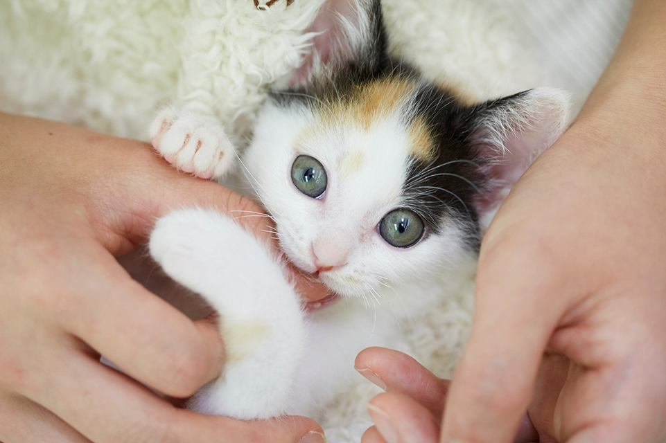 保護猫アメと里親マリの肉球記(4)~猫の性格は社会化期に決まる!?~