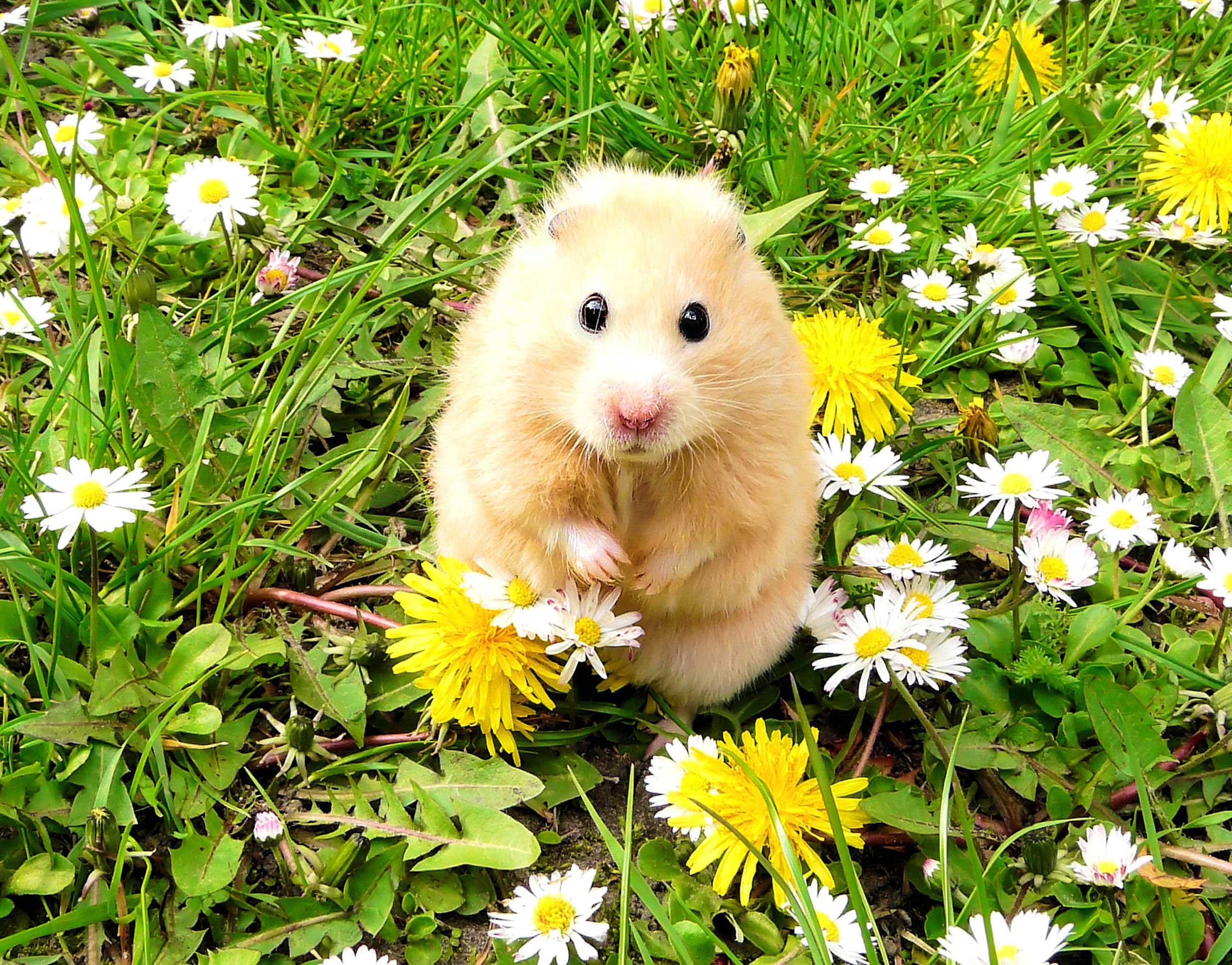お花畑に佇むハムスター