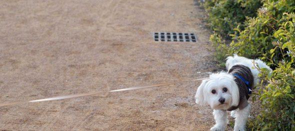 【トリビア】イヌとゾウ、おしっこタイムは「ほぼ同じ」!