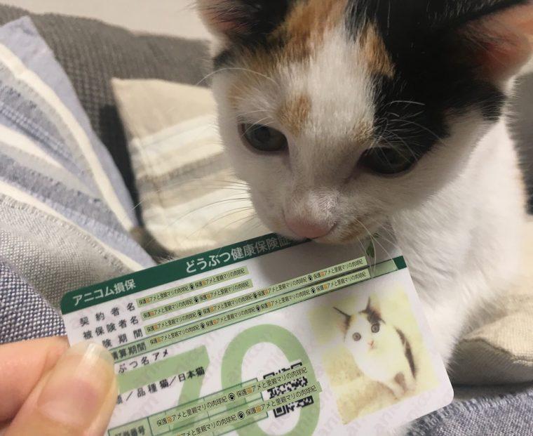 保護猫アメと里親マリの肉球記(6)~アメ、ペット保険に入る~