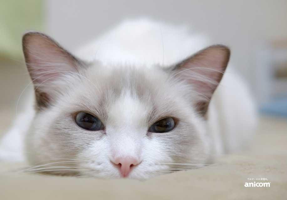 猫がじーっとこっちを見ている画像
