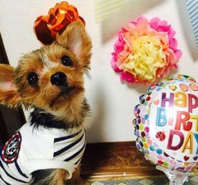 料理経験ゼロの私が、愛犬の誕生日をプロデュースしてみた!