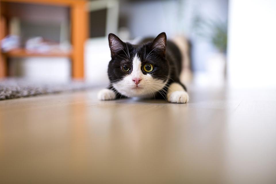 なぜ、猫は猫嫌いの人に近づくのか?