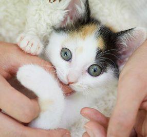 保護猫アメと里親マリの肉球記(8)~痛い!噛まないで~