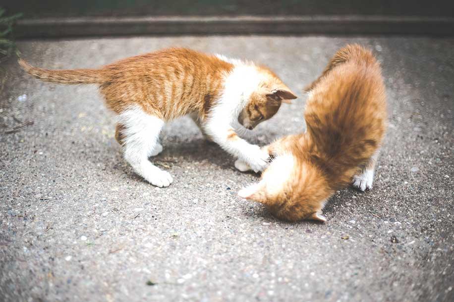 路上で戯れる子猫