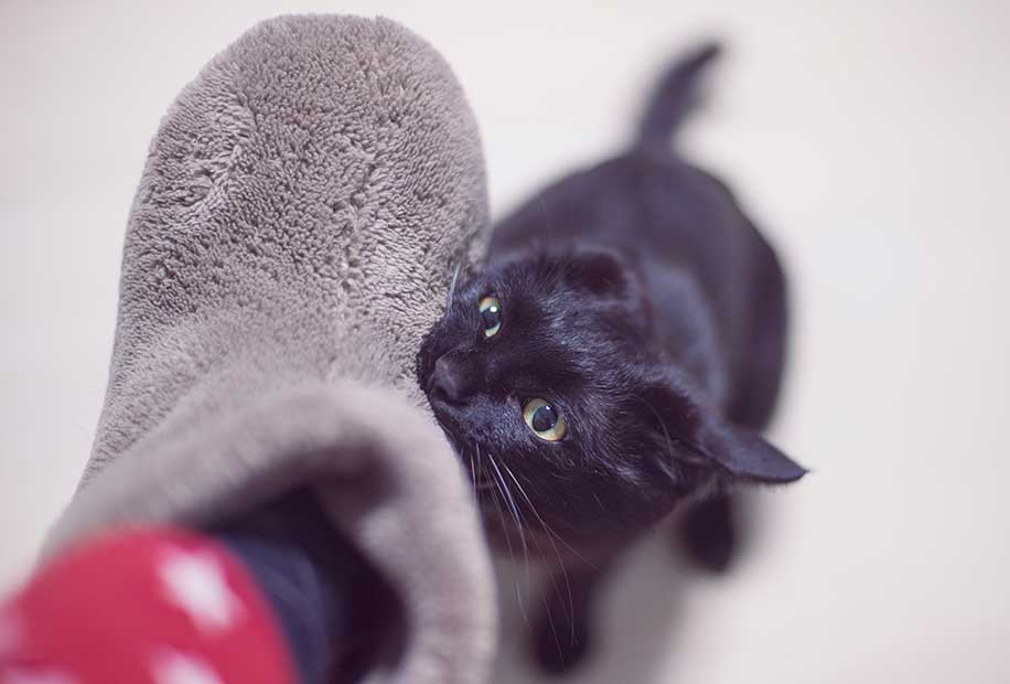 足に噛みつく猫の画像