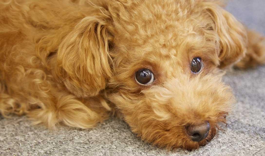 【10月10日は目の愛護デー】 白目!黒目!犬の目!