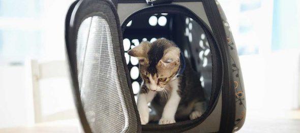 猫ちゃんにキャリーが必要なわけ