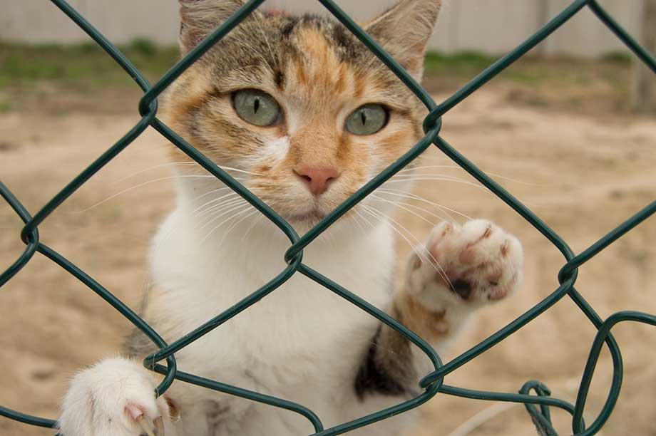 格子網から覗く猫