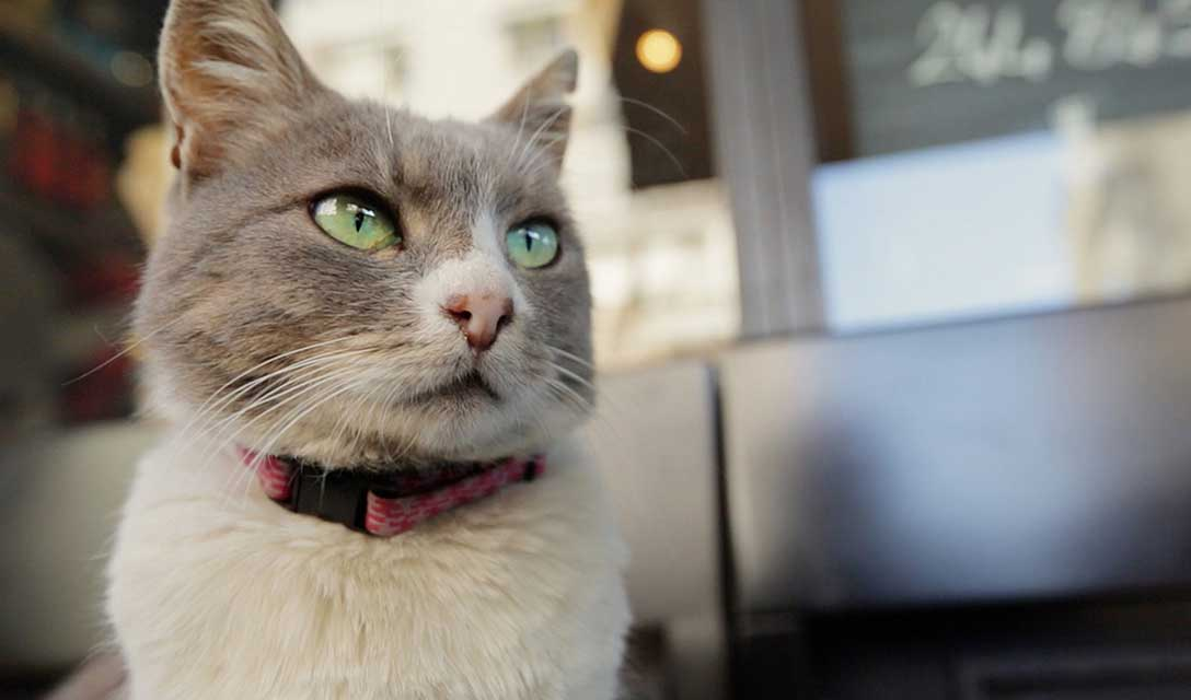 『猫が教えてくれたこと』 ジェイダ・トルン監督 独占インタビュー
