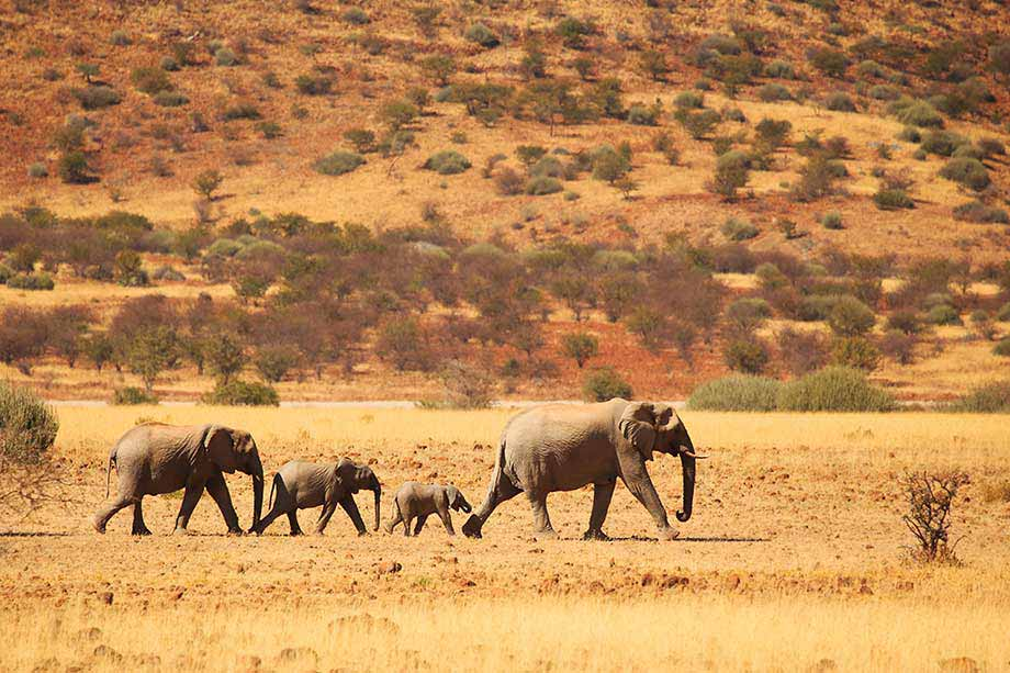 アフリカのイメージ画像