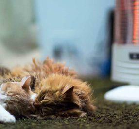 【意外と怖い!ネコちゃんの暖房好き】