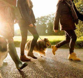 【みんなどうやって解決している?】お散歩中に吠える対策3つのワザ