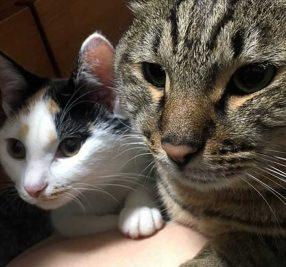 保護猫アメと里親マリの肉球記(12)~トイレの選び方~