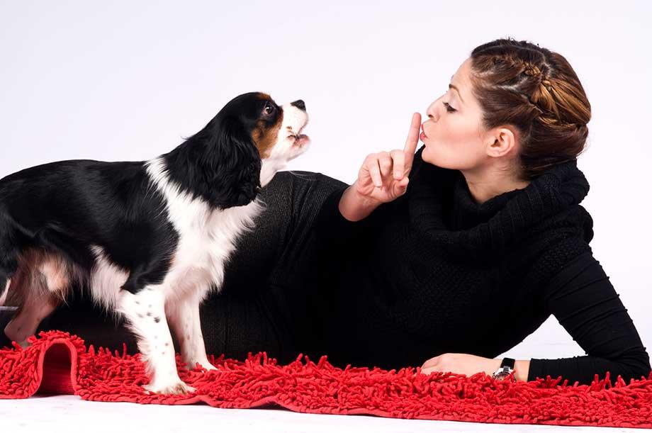 警戒吠えをする犬のイメージ画像