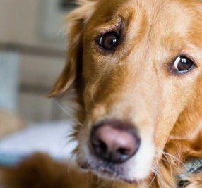 犬の分離不安症とは?