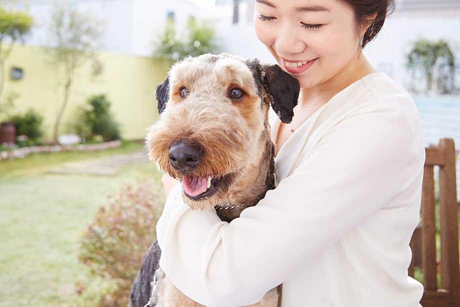 人と犬がふれあうイメージ図