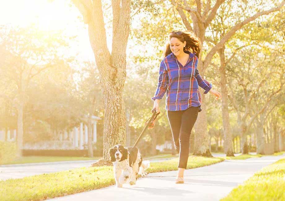 犬のお散歩している画像
