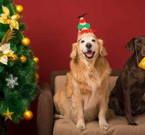 ワンちゃんと一緒にクリスマスを楽しもう!