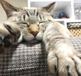 保護猫アメと里親マリの肉球記(13)~猫のしぐさ~