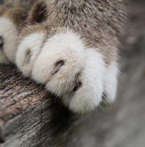 猫の爪とぎ