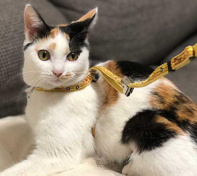 保護猫アメと里親マリの肉球記(15)~ネコ散歩~