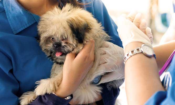 診察されている犬の写真