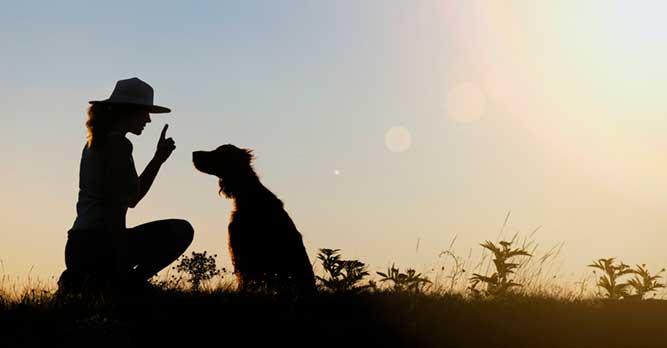 犬にしつけをしている様子の写真