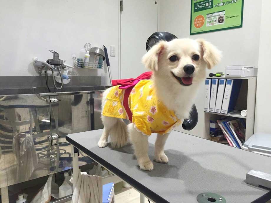 診察台に立つ犬の画像