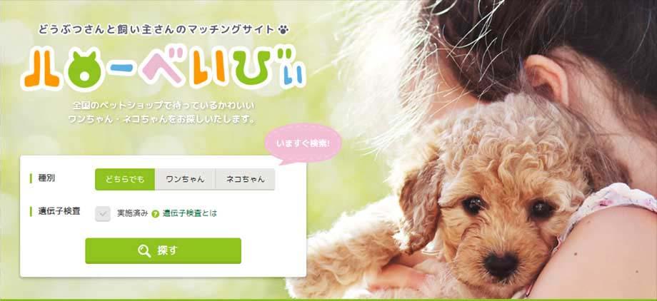 全国のペットショップからかわいいワンちゃんネコちゃんを探すことができる情報サイト ハローべいびぃ