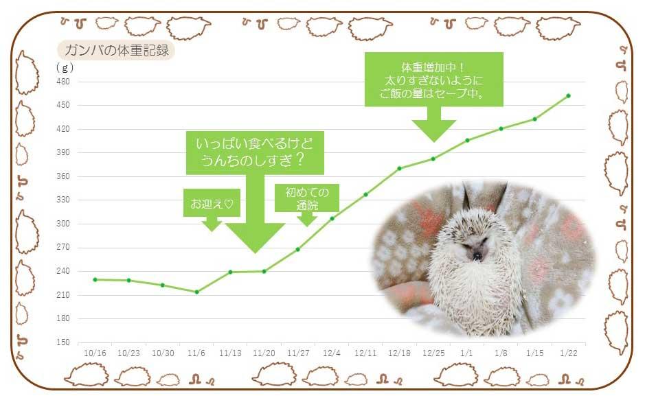 ハリネズミの体重記録の表