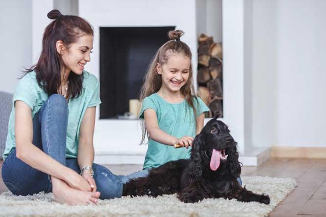 愛犬を愛でる家庭の様子