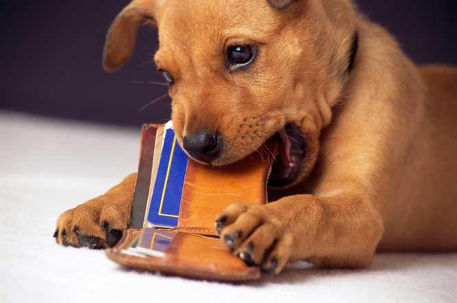 お財布をかじる犬