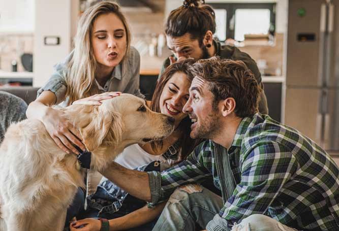 人に囲まれ笑顔を向けられている犬