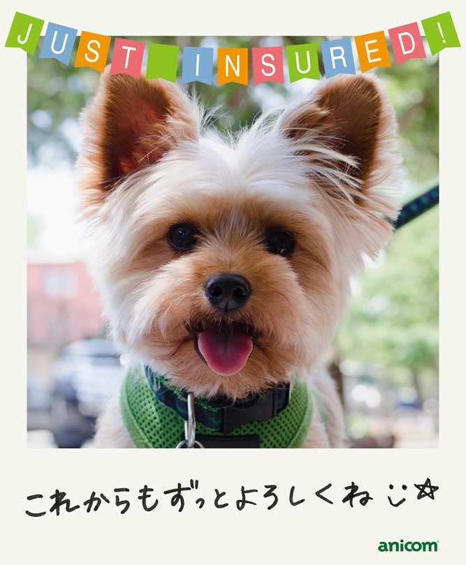 LINEでペット保険契約「お楽しみ画像②」