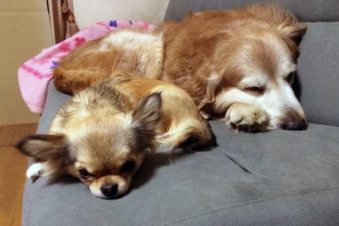 2頭の犬が寝ている