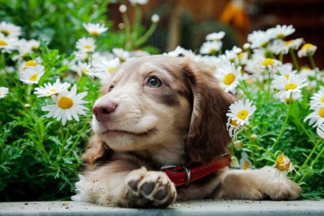 お花の中の子犬