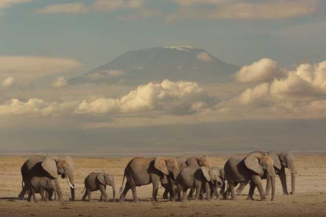 象の群れの写真