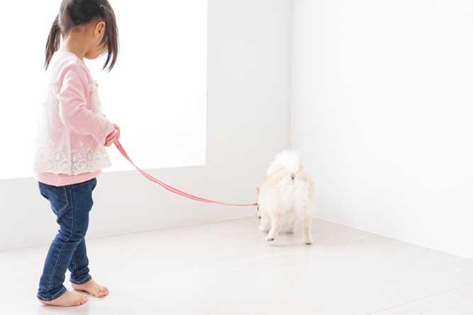 室内で犬の散歩をしている様子
