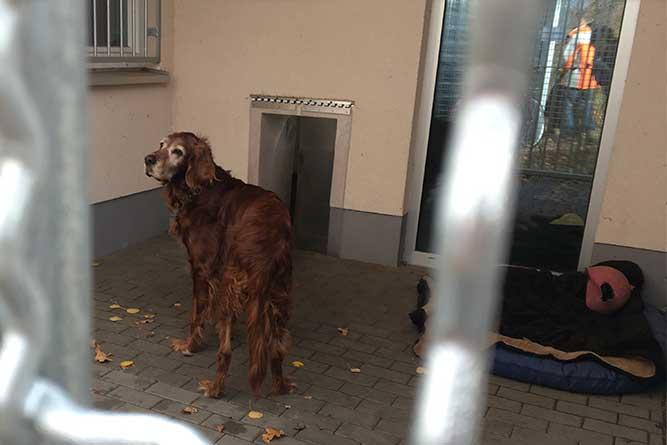 施設で終生飼養することが決まっている高齢の犬