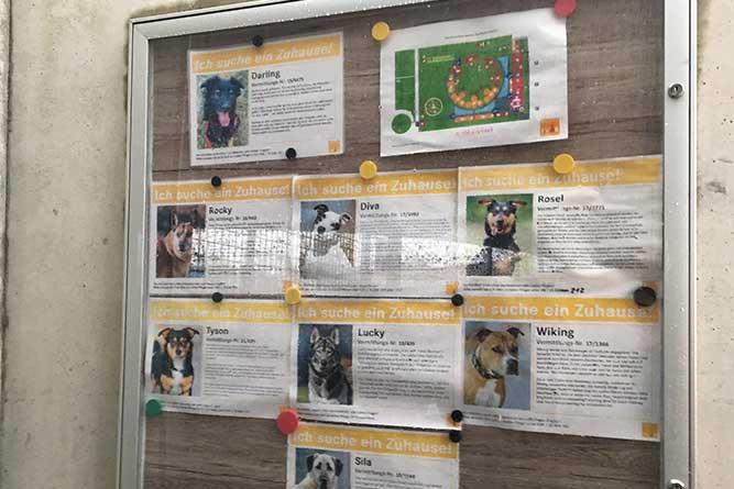 保護犬の情報一覧。ティアハイム ベルリンにて