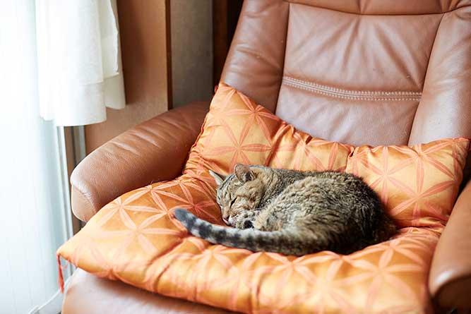 お気に入りの座布団の上で、毎日、まったりする猫