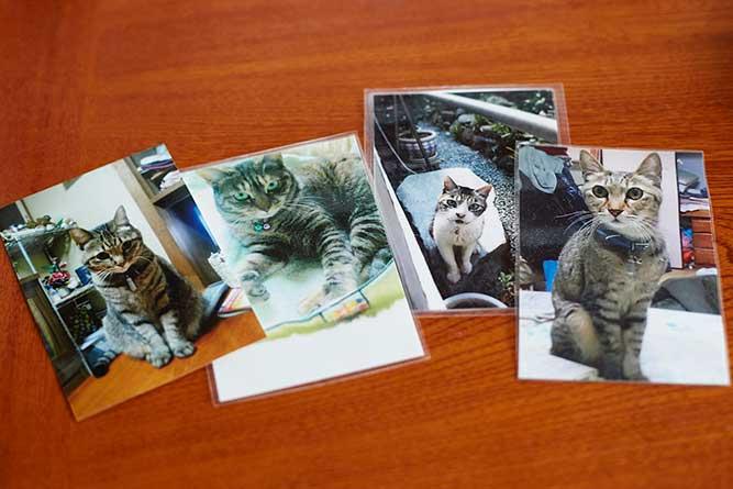 歴代の愛猫の写真