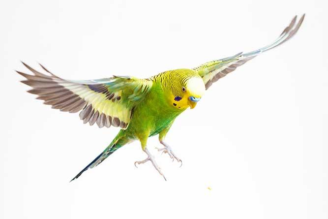 飛ぶ鳥の写真