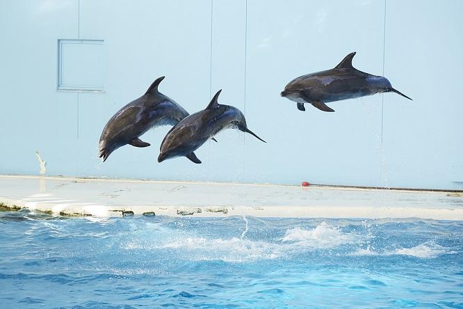 3頭のイルカの華麗なるジャンプ