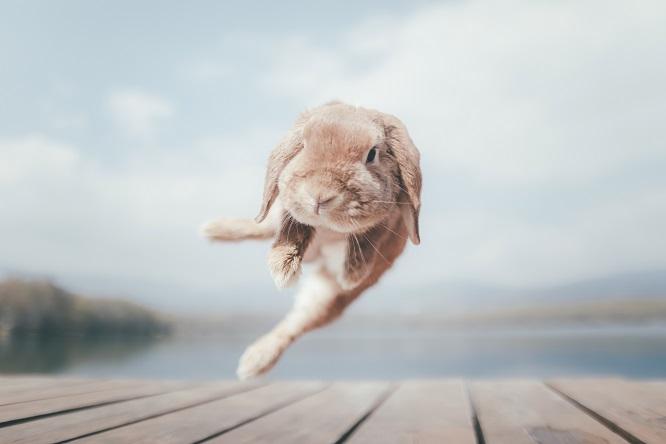 ジャンプするうさぎ